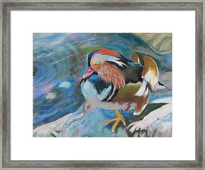 Sleeping Mandarin Duck Framed Print