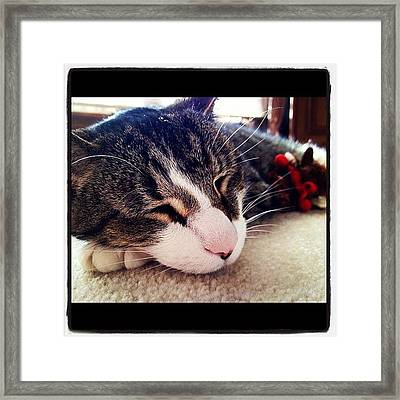 Sleeping Framed Print by Mike Maher