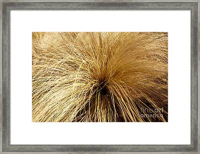 Sleeping Plant Aglow In Winter Sun Framed Print by Lena Wilhite