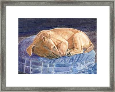 Sleeping Puppy Framed Print by Ruth Seal