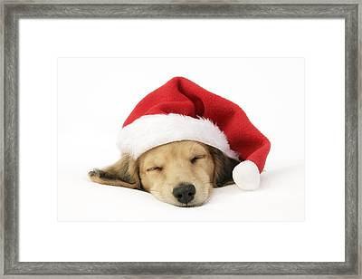 Sleeping Santa Puppy Framed Print