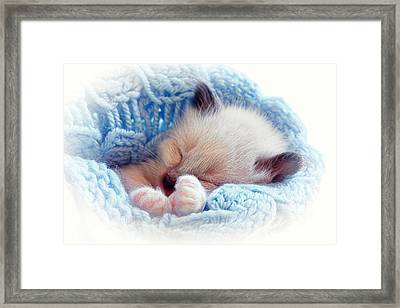 Framed Print featuring the photograph Sleeping Siamese Kitten by Tracie Kaska