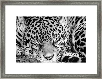 Framed Print featuring the photograph Sleeping by Steven Santamour