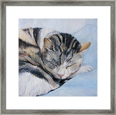 Sleeping Sullivan Framed Print by Fiona Quinn