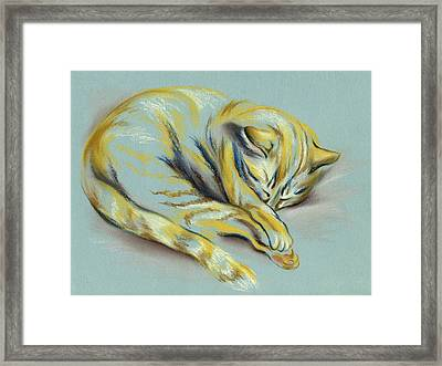 Sleeping Tabby Kitten Framed Print