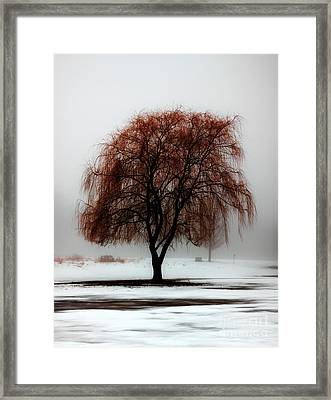 Sleeping Willow Framed Print