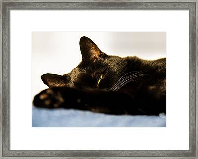 Sleeping With One Eye Open Framed Print