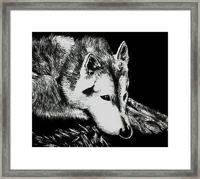 Sleeping Wolf Framed Print by Shabnam Nassir