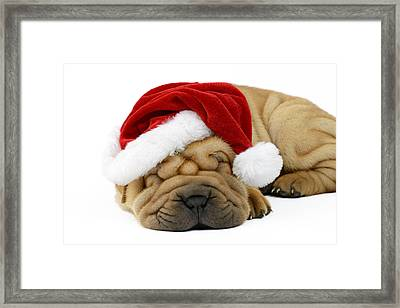 Sleeping Xmas Pup Framed Print