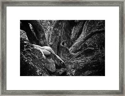 Sleepless Framed Print by Jeremy Bartlett