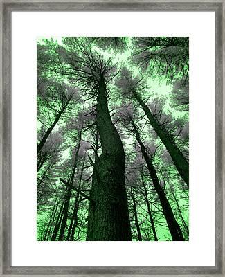 Sleepwalking Framed Print by Luke Moore