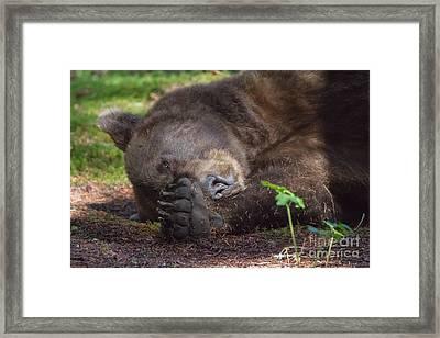 Sleepy Head Framed Print