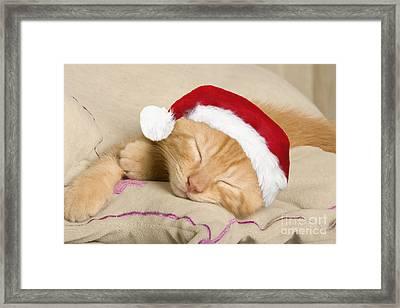 Sleepy Christmas Kitten Framed Print