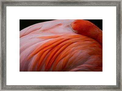 Sleepy Flamingo Framed Print by Andres Leon