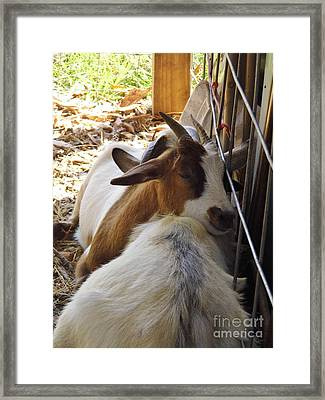 Sleepy Head Framed Print by D Hackett