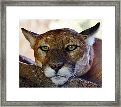 Framed Print featuring the photograph Sleepy Kitty by Elaine Malott