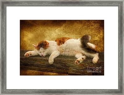 Sleepy Kitty Framed Print by Lois Bryan