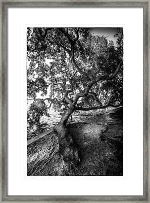 Sleepy Oak Framed Print by Marvin Spates