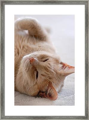 Sleepy Orange Cat Framed Print by Amy Cicconi