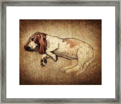 Sleepy Penny Framed Print by Kyle Wood