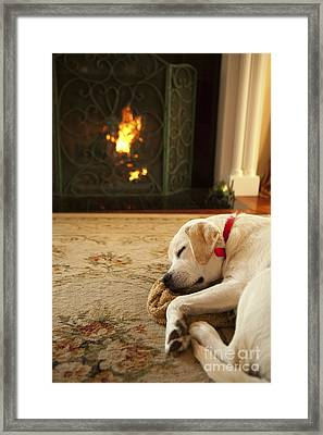 Sleepy Puppy Framed Print by Diane Diederich