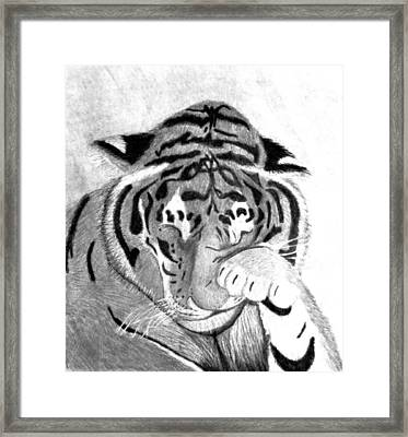 Sleepy Tiger Framed Print by Michelle McPhillips