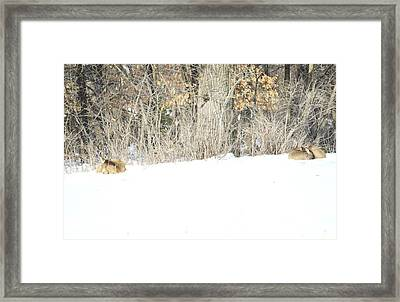Framed Print featuring the photograph Sleepy Time by Dacia Doroff