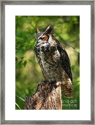 Sleepy Time In The Forest Great Horned Owl  Framed Print by Inspired Nature Photography Fine Art Photography