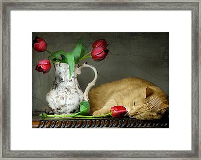Sleepy Tulips Framed Print by Diana Angstadt