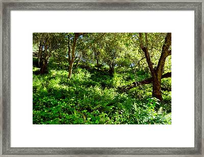 Framed Print featuring the photograph Sleepy Valley Oaks by Gary Brandes