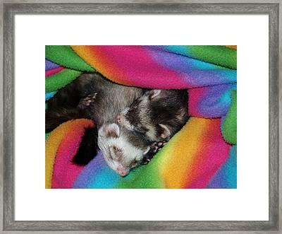 Sleepy Weezles Framed Print