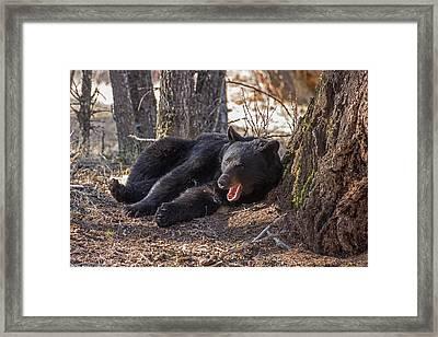 Sleepyhead Framed Print by Sandy Sisti
