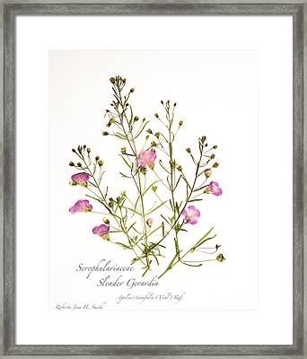 Slender Gerardia 3 Framed Print