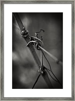 Framed Print featuring the photograph Slender by Russell Styles