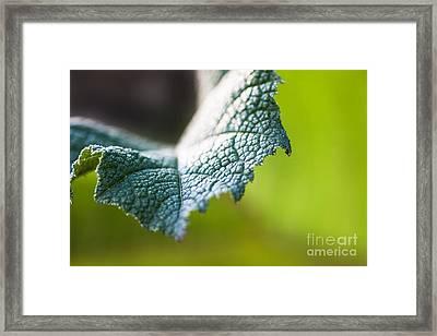 Slice Of Leaf Framed Print