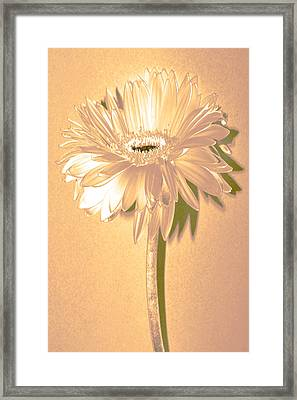 Slice Of Lime Zinnia Framed Print by Sherry Allen