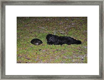 Slider And Shih-tzu Framed Print by Al Powell Photography USA