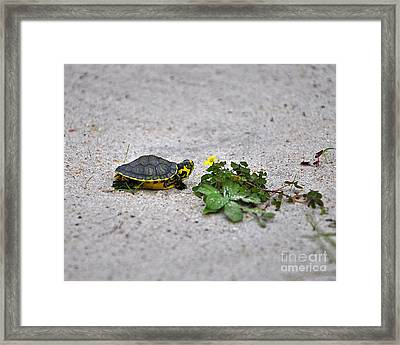 Slider And Sorrel In Sand Framed Print by Al Powell Photography USA