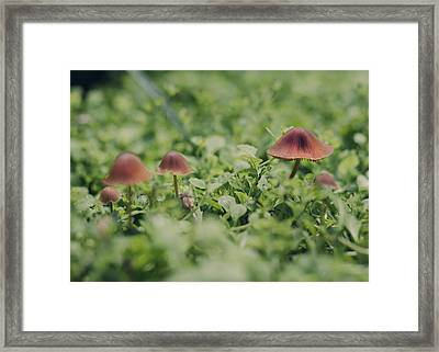 Slightly Magical Mushrooms Framed Print by Heather Applegate