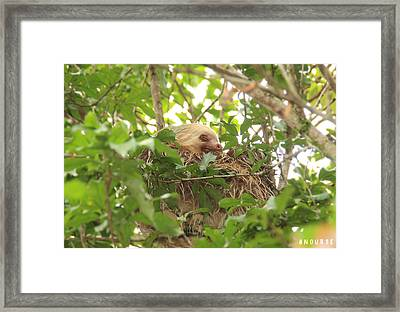 Sloth Framed Print by Andrew Nourse