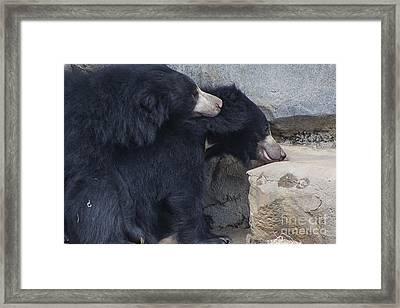 Sloth Bear Framed Print by Twenty Two North Photography