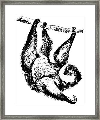 Sloth Drawing Framed Print by