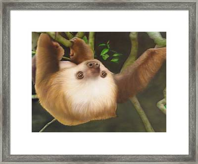 Sloth In A Tree Framed Print