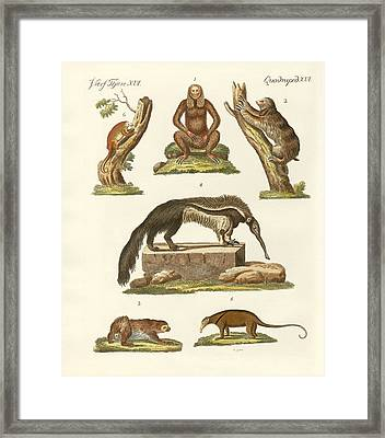 Sloths And Anteaters Framed Print