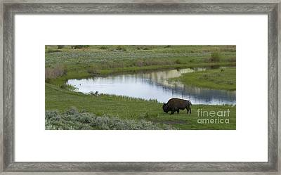 Slough Creek   #4111 Framed Print