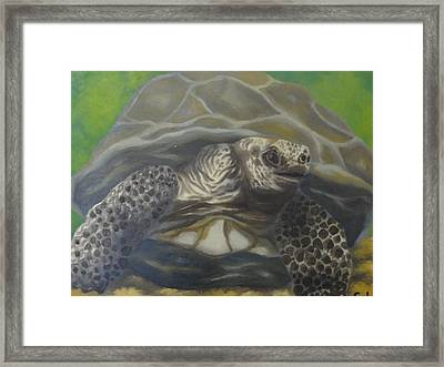 Slow And Steady Framed Print