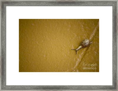 Slow But Steady Framed Print by Anne Rodkin