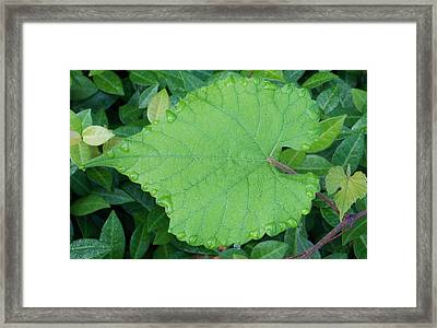 Framed Print featuring the photograph Slow Down And Look by John Glass