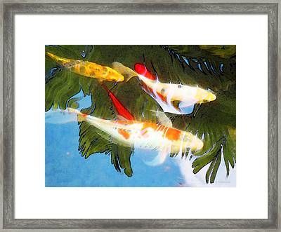 Slow Drift - Colorful Koi Fish Framed Print by Sharon Cummings
