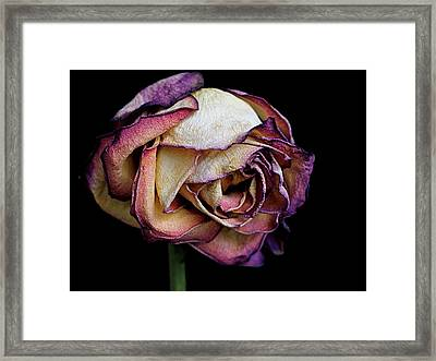 Slow Fade Framed Print by Rona Black